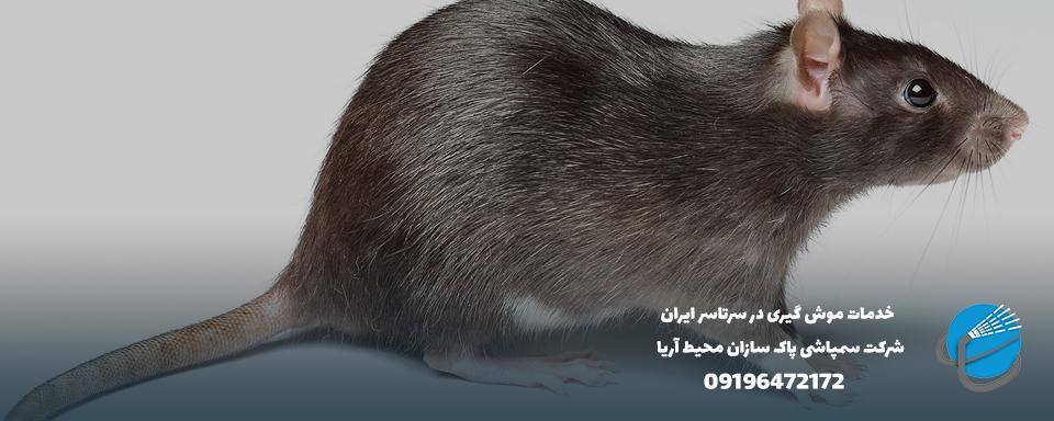 شماره تلفن مبارزه با موش
